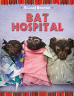 Bat Hospital (Animal Rescue)